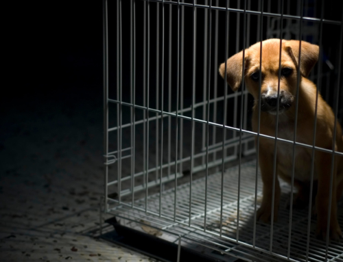 Understanding Animal Cruelty Charges in Austin, TX